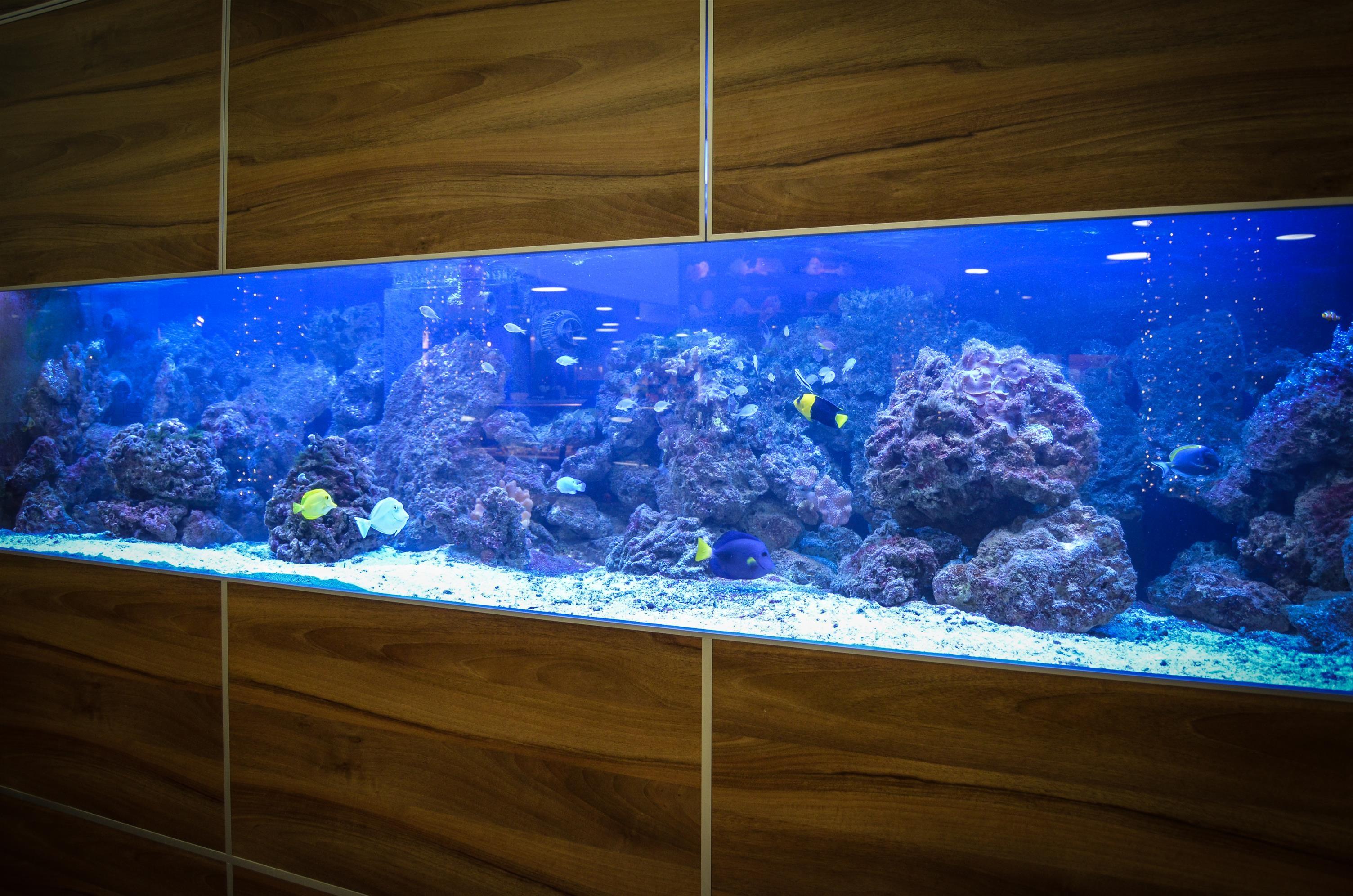 Acuarios de dise o aquatic ecosystem engineering for Disenos de acuarios